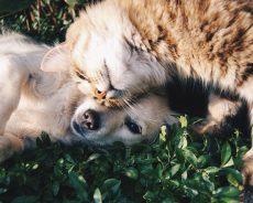 España: crece el seguro de perros y gatos en caso de fallecimiento