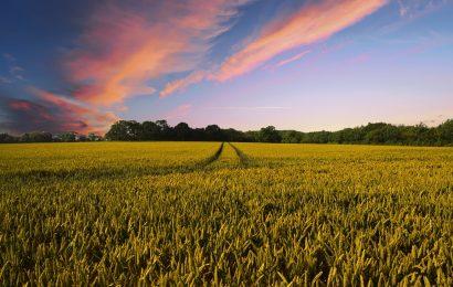 Galeno Seguros incursiona en los seguros agrícolas