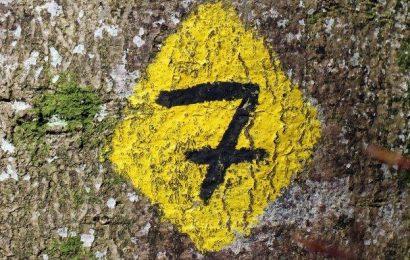 Los siete grandes temas que el Seguro debe conocer para prosperar en la nueva realidad